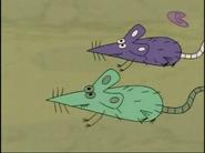 SitBC Rats