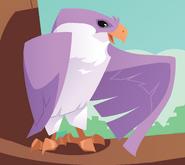Animal Jam Falcon