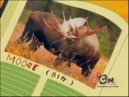 Camp Lazlo Moose