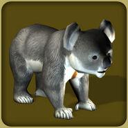 Koala2 (Blue Fang)
