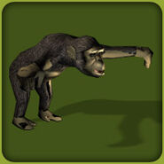 Chimpanzee Common (Blue Fang)