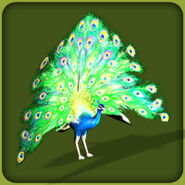 Common Peafowl (Blue Fang)