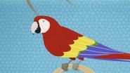 Scarlet Macaw (Wild Kratts)