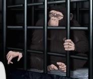 HBO Animals Chimpanzee