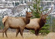 Elk-2139276 960 720