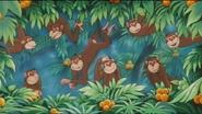 JEL Chimpanzees