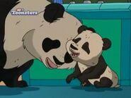 TWT Pandas