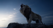 TLK 2019 Lion