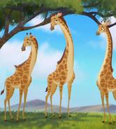 TLG Giraffes