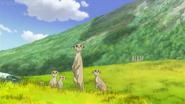 JEL Meerkats