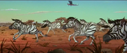 TWT Zebras