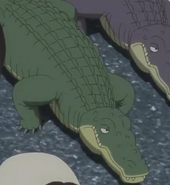 JEL Alligators