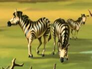 Jumpstart Zebras