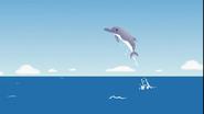 MAD Dolphin