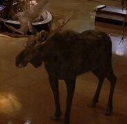 NatM Moose