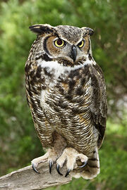 Owlperched