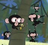 PPG Chimps