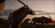 TLK 2019 Oryxes