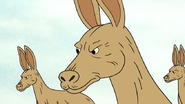 S6E13.144 Mad Kangaroos