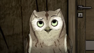HBO Animals Screech Owl