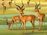 Jumpstart Impalas