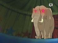 Bobobo-bo-bo-bobo Elephant