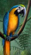 Jumpstart Macaw