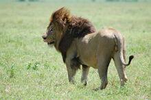 Ngorongoro Crater, Tanzania (2288742082)