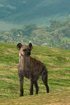Afrika hyena by linconnu24-d3ckgih