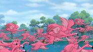 Greater-flamingo-tarzan-2