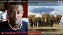 10 Critically Endangered Animals of Africa Elephants