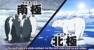 Yo-kai Watch Emperor Penguins and Polar Bear