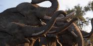 TLK 2019 Elephants