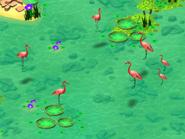 Greater-flamingo-wonder-zoo