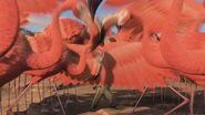 Greater-flamingo-madagascar-2