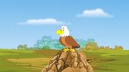 Appu Eagle