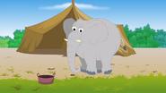 Appu Elephant