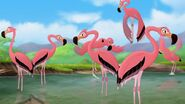 Greater-flamingo-the-lion-guard