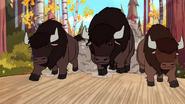 American-bison-gravity-falls