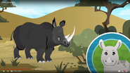 IaLR Black Rhinoceros