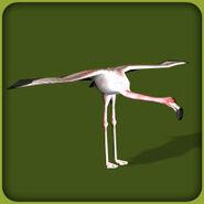 Greater-flamingo-zoo-tycoon
