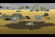 African-elephant-wild-kratts