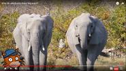 Kiddopedia Elephants