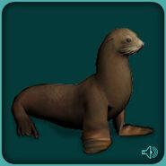 California-sea-lion-zoo-tycoon