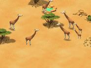 Giraffe-wonder-zoo