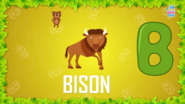 Baby Time Bison