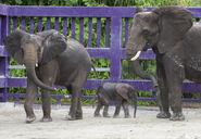 Disney Elephants