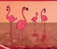 Greater-flamingo-aladdin
