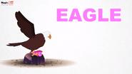MagicBox Eagle