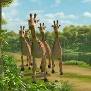JungleBunch Giraffes